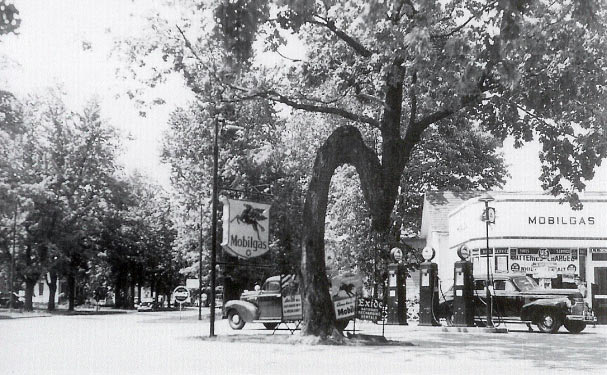 Milan's Crooked Tree
