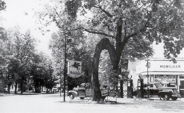 Milan's Crooked Tree